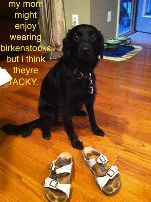 birkenstock-dog