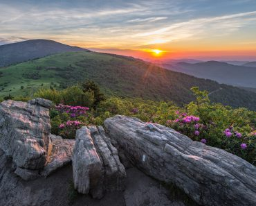 Rhododendron bloom along the Appalachian Trail in Tennessee